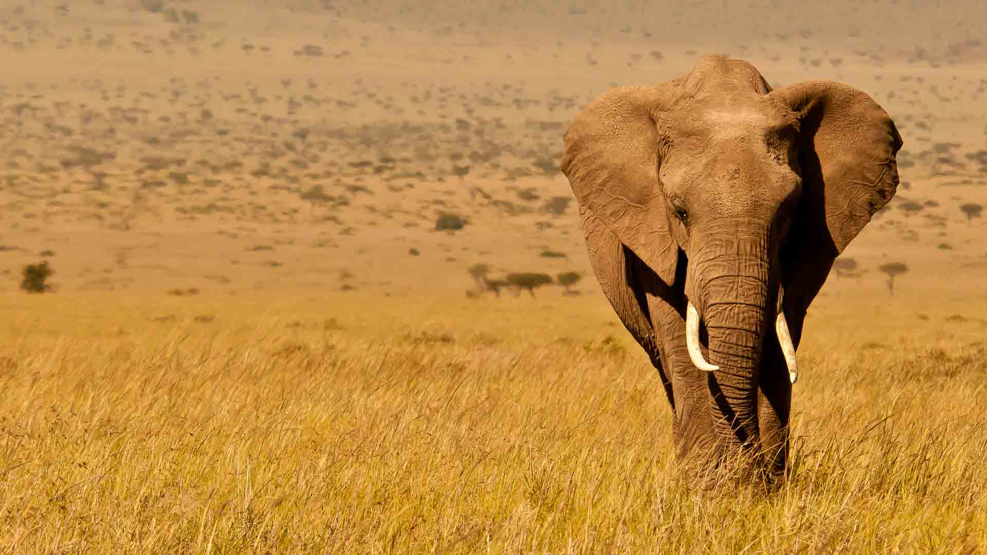 kenya-wildlife-elephant-copyright-will-bolsover