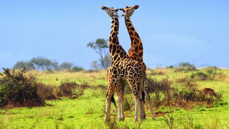 About Akagera National Park Rwanda