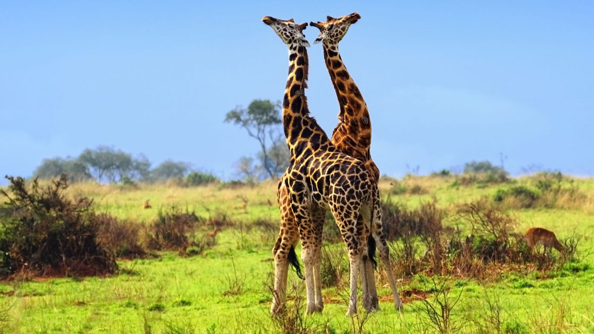 Read more about the article About Akagera National Park Rwanda