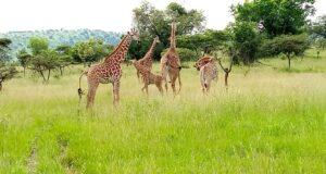 rwanda and uganda tour