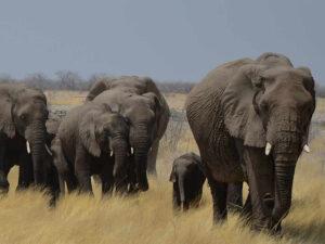 mombasa nairobi safaris