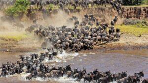 rwanda and tanzania safari