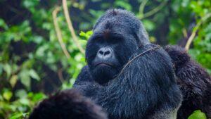 adventure and gorilla trekking safari