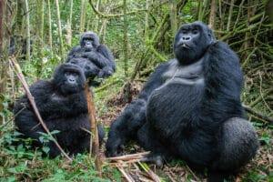 congo and rwanda adventure